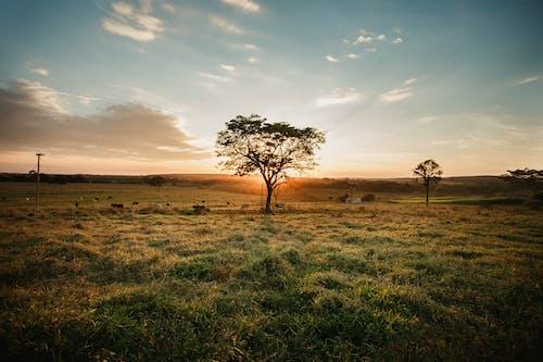 Безкоштовне стокове фото на тему «вечір, дерево, Захід сонця, краєвид»