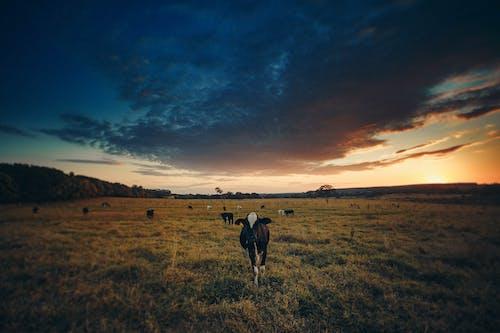 Безкоштовне стокове фото на тему «вечір, Захід сонця, краєвид, надворі»