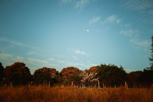 Безкоштовне стокове фото на тему «Деревина, дерево, Захід сонця, краєвид»
