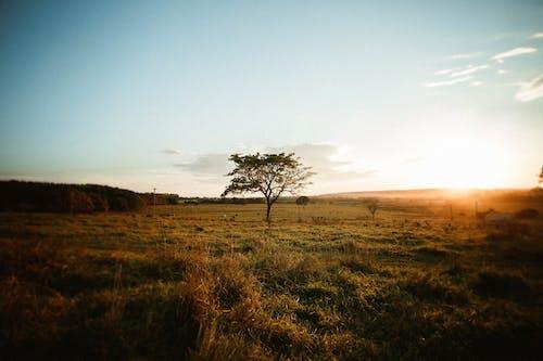 Безкоштовне стокове фото на тему «вечір, дерево, Захід сонця, золотистий»