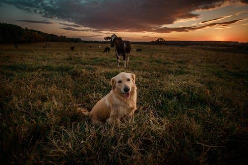 Безкоштовне стокове фото на тему «вечір, Захід сонця, золотистий, золото»