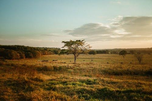 açık hava, ağaç, akşam, akşam karanlığı içeren Ücretsiz stok fotoğraf