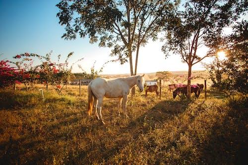 Безкоштовне стокове фото на тему «дерево, корова, краєвид, луг»
