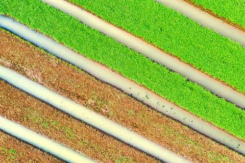 Безкоштовне стокове фото на тему «абстрактний, архітектура, візерунок, газон»