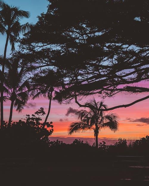 Gratis arkivbilde med bakbelysning, daggry, dramatisk himmel