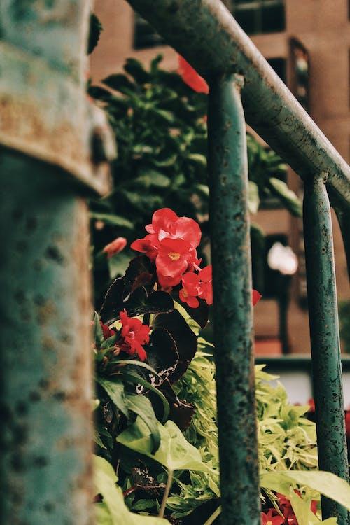 Red Flowers Behind Green Metal Railing