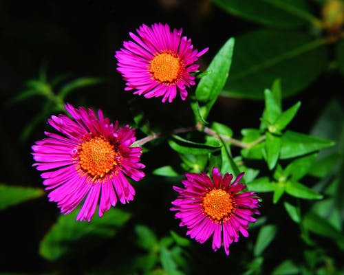 3 Pink and Brown Flower