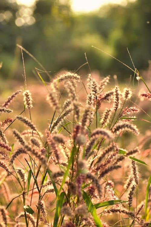 açık hava, alan, arazi, bitki örtüsü içeren Ücretsiz stok fotoğraf