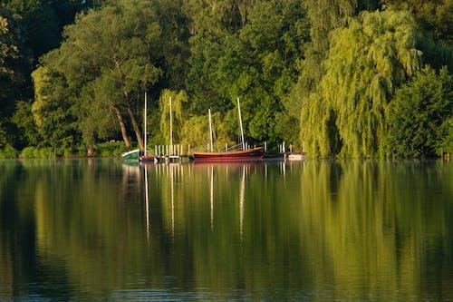 Free stock photo of boat, lake, trees