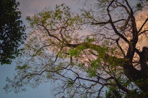 Δωρεάν στοκ φωτογραφιών με beyong φαντασία, saveplanet, αποχρώσεις του δέντρου