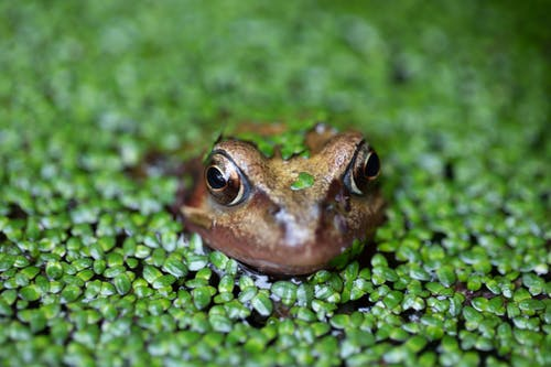 Brown Frog on Green Moss