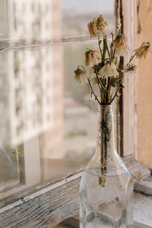 Fleurs Blanches Dans Un Vase En Verre Transparent