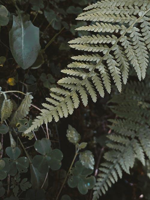 Top view lush bracken stems with vascular leaves vegetating in verdant summer woodland