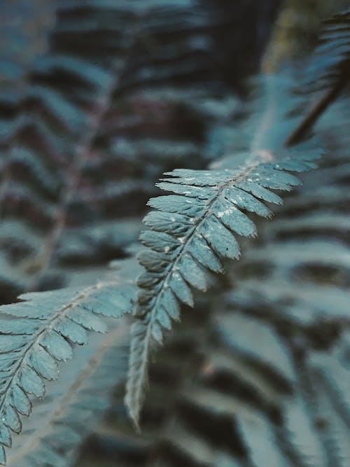 Green fern branches in summer forest