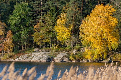 Immagine gratuita di acqua, alberi, albero, all'aperto