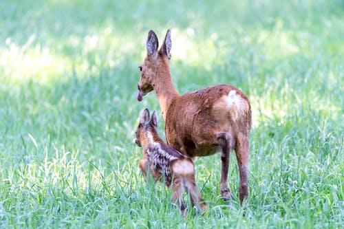 Immagine gratuita di all'aperto, animale, animale selvatico, bambino