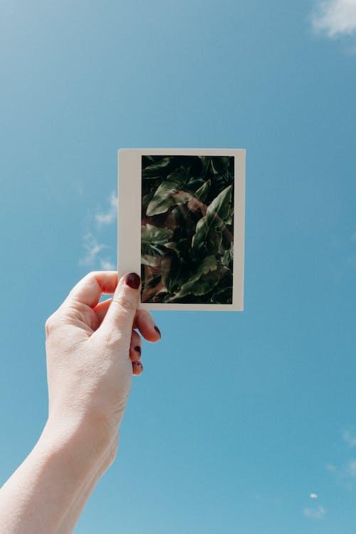 Základová fotografie zdarma na téma dospělý, holka, instantní fotografie, koncepční