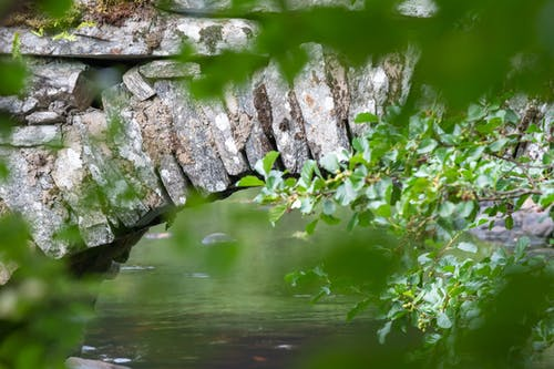 Immagine gratuita di albero, all'aperto, ambiente, bellissimo