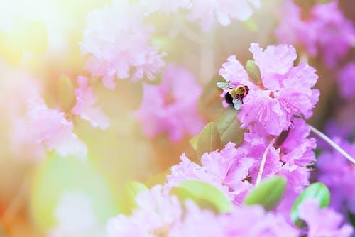 Ảnh lưu trữ miễn phí về cánh hoa, con ong, Đầy màu sắc, đẹp