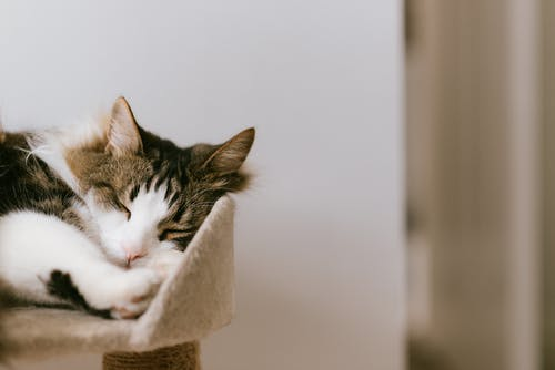 Adorable fluffy cat with closed eyes resting on cozy tower in house in daylight