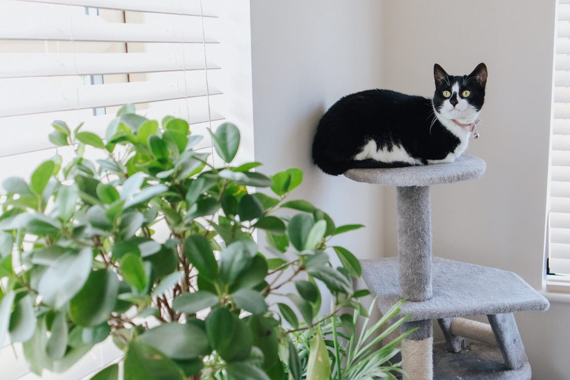 Adorable cat with attentive gaze lying on scratching post near plant while looking up at home