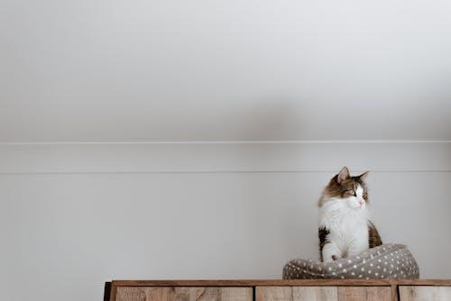 Gato Adorável Descansando Na Cama Macia No Armário