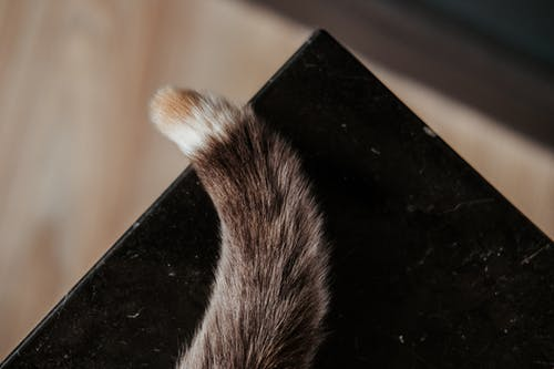Fluffy tail of cat on table