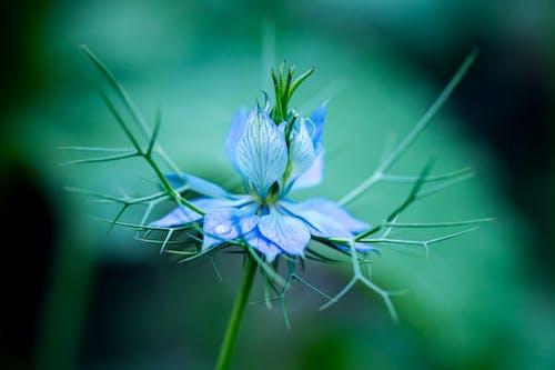 Free stock photo of blue, bokeh, dreamy, flower