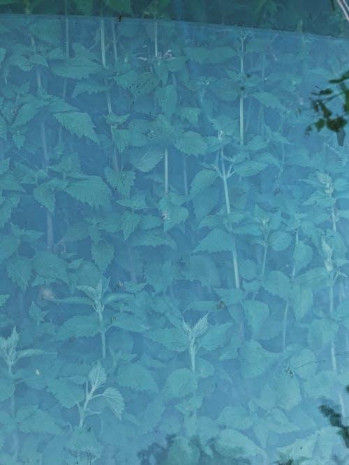 Darmowe zdjęcie z galerii z