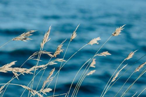 乾的, 乾草, 吸管, 增長 的 免費圖庫相片