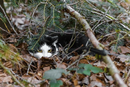 Black and White Cat on Brown Dried Leaves