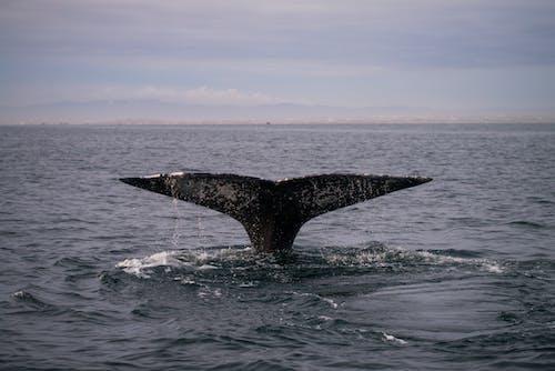 Black Whale on Blue Sea Under Blue Sky