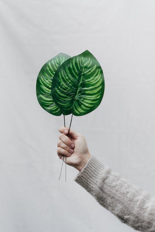 Person, Die Grüne Tropische Blätter Zeigt