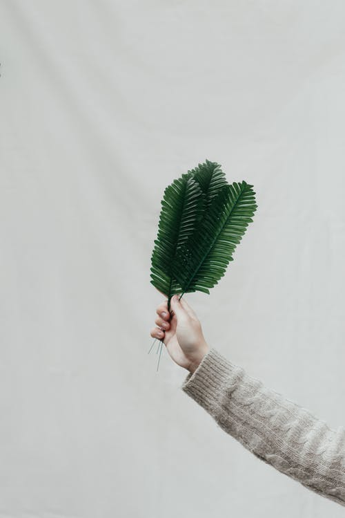 Crop unrecognizable person reaching out hand and showing tropical green leaves of fern against white background