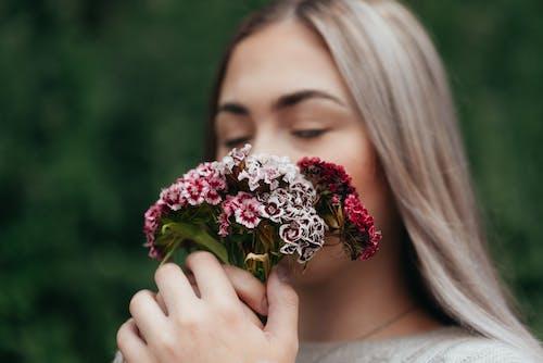 Δωρεάν στοκ φωτογραφιών με dianthus barbatus, ανάπτυξη, ανθίζω, άνθος