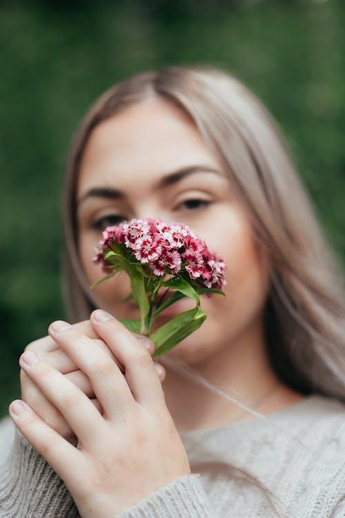 Foto d'estoc gratuïta de amable, aroma, aromàtic, botànica