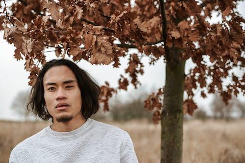 Foto d'estoc gratuïta de arbre, asiàtic, bagul, baixa