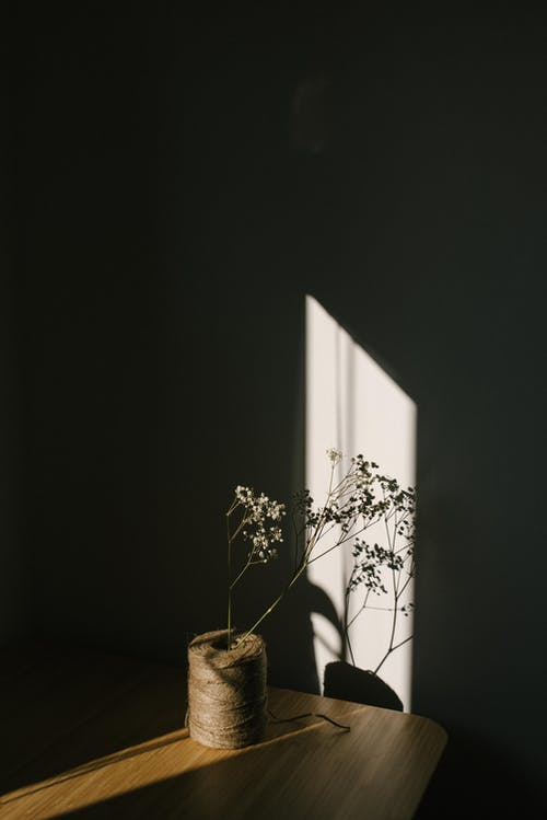 White tender flower on thin stem placed on tying twine placed in dark room in ray of light