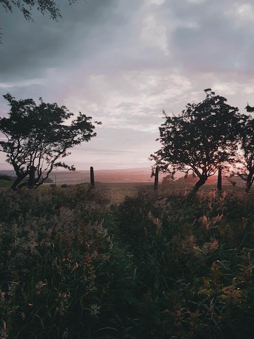 スコットランド, スコットランド人, ピンクの空の無料の写真素材