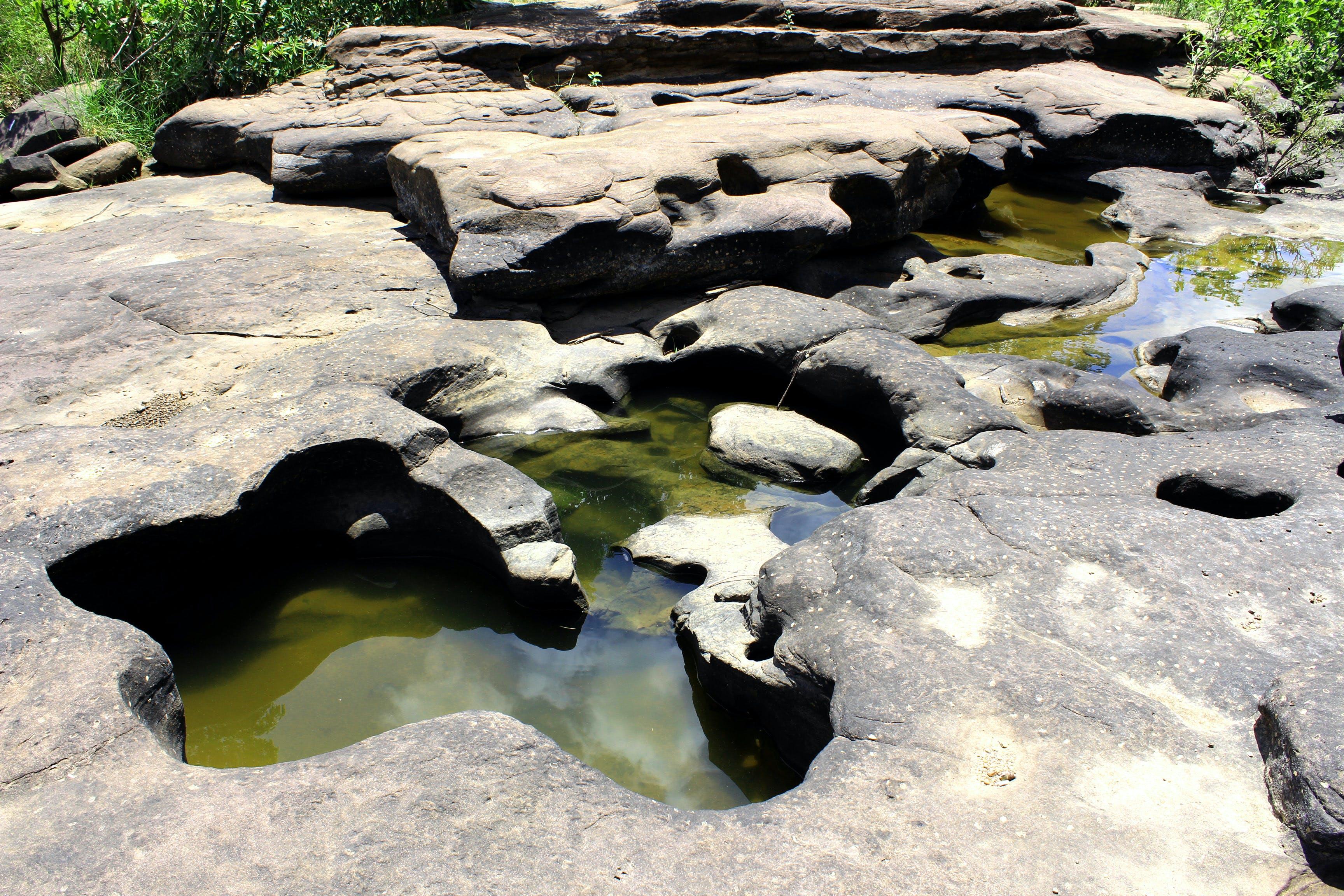 คลังภาพถ่ายฟรี ของ ก้อนหิน, ตะไคร่น้ำ, ธรรมชาติ, น้ำ