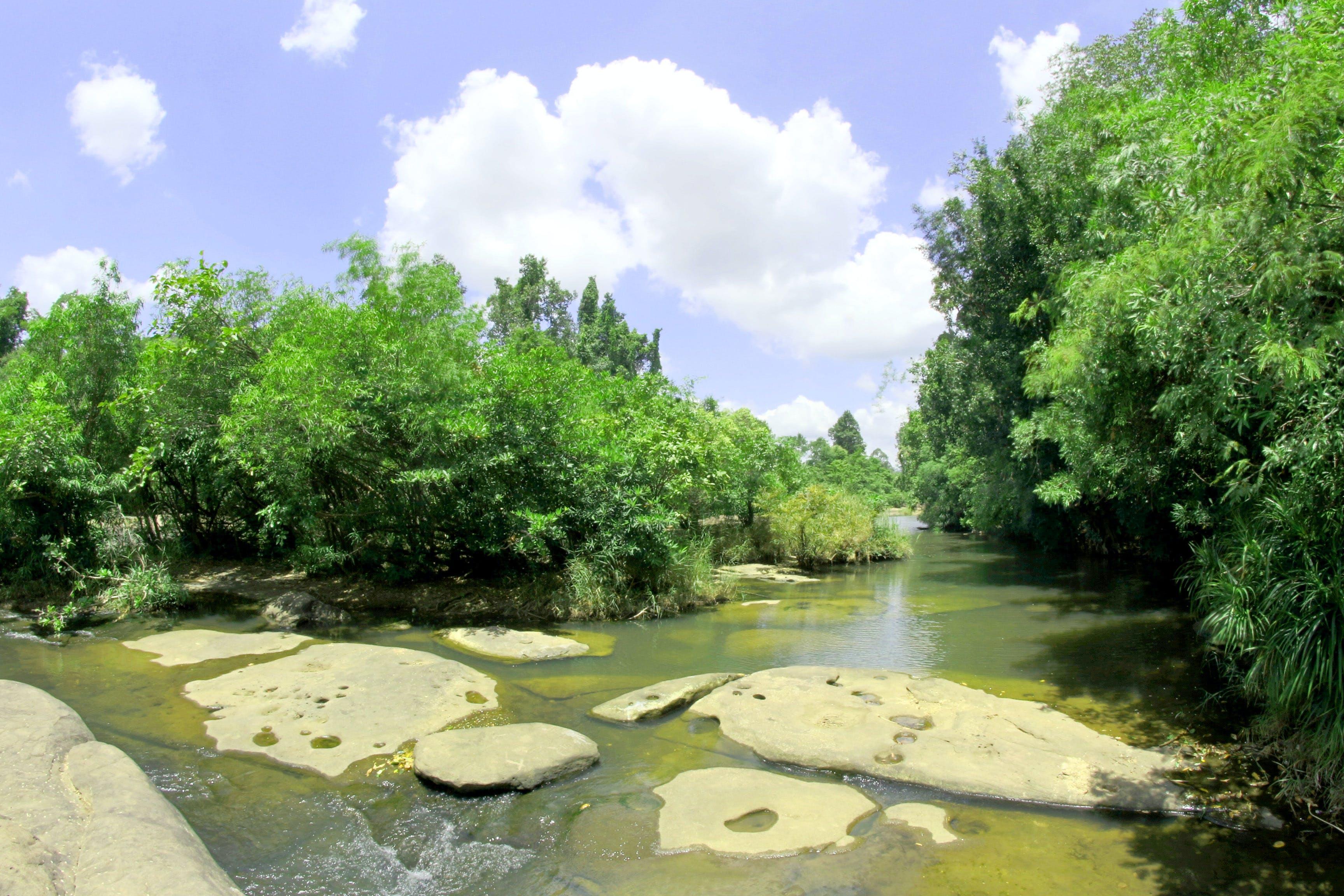 Foto profissional grátis de água, árvores, Ásia, Asiático