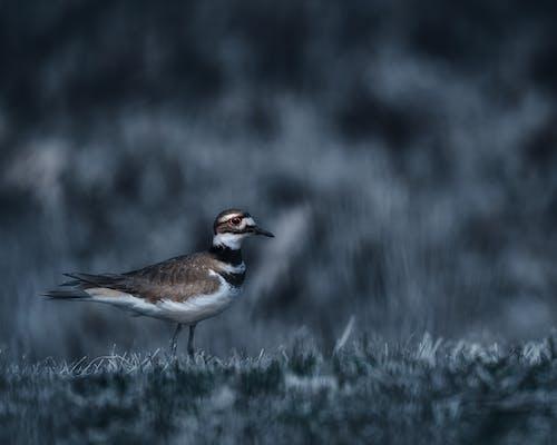 Wild bird in gray countryside