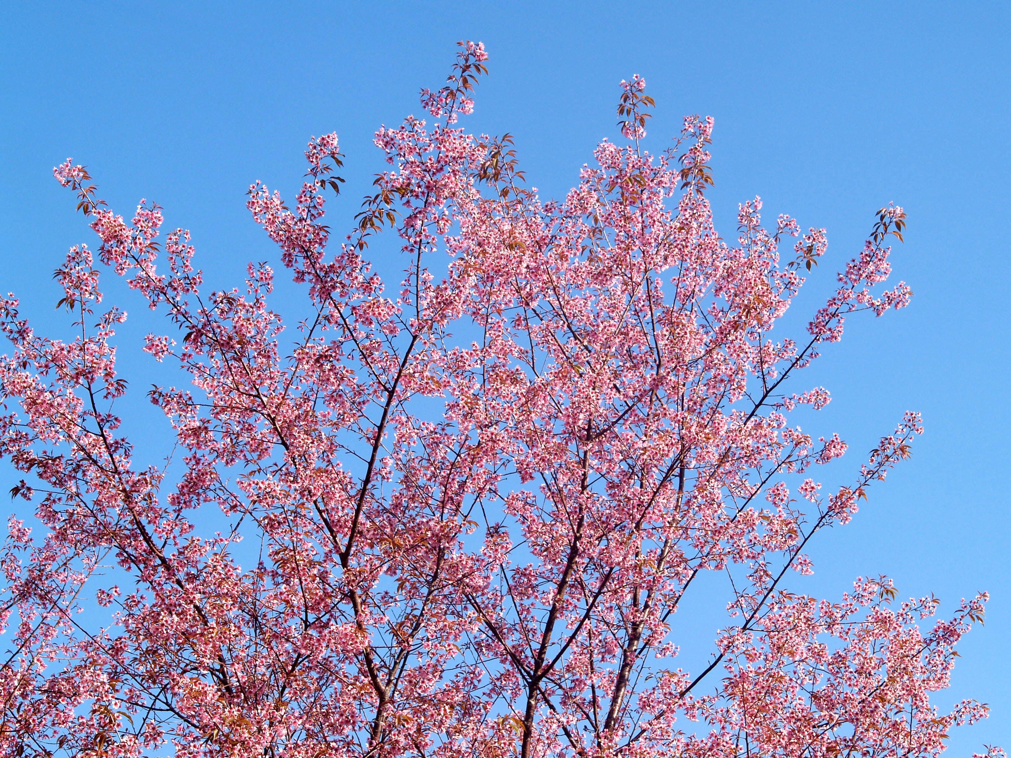 Foto profissional grátis de árvore, aumento, broto, céu