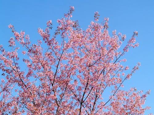 Foto d'estoc gratuïta de arbre, cel, creixement, delicat
