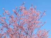 nature, sky, flowers