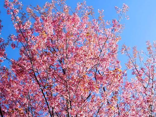 Imagine de stoc gratuită din albastru, anotimp, arbore, armonios