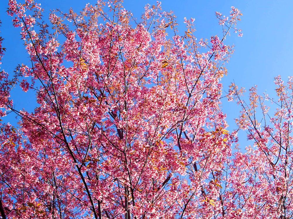 albastru, anotimp, arbore