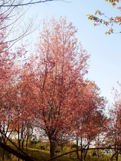 Kostnadsfri bild av bakgrund, blå himmel, blomma, blommig