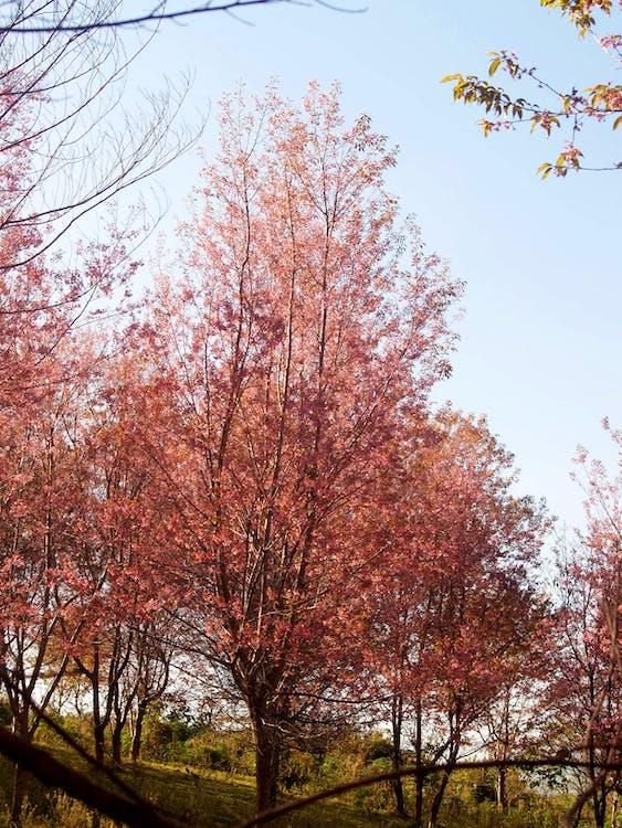 arbres, assolellat, auró