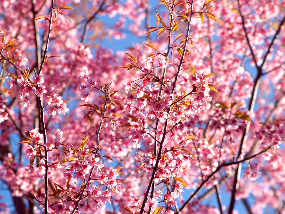 árbol, bonito, brillante